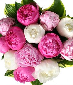 Peonies, my favorite flower!