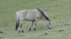 Horses, Animals, Animais, Animales, Animaux, Animal, Horse, Dieren