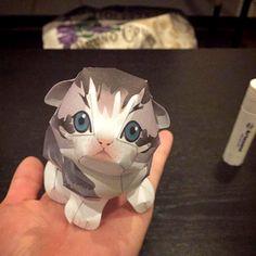 m.a.i.999様より  かわいいスコティッシュフォールド💕➡️https://goo.gl/c7WH0r   やっば。。 めちゃ可愛いこれ。。(*´艸`*)♡ #猫好きさんと繋がりたい #猫 #ペーパークラフト #手乗り #ペット #にゃんこ #子猫