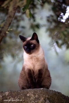 """""""A cat is Nature's beauty."""" --French Proverb"""