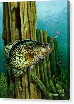 Crappie Fishing, Kayak Fishing, Fishing Tips, Carp Fishing, Fishing Tackle, Crappie Lures, Fishing Basics, Fishing Stuff, Bass Fishing Pictures