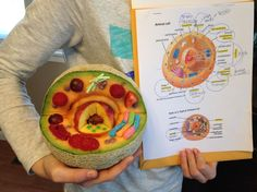 Edible Animal Cell made from a Cantaloupe, Strawberries, Grapes, Raspberries, Nerds, Gummy Worms, Big League Chew and Fruit Roll-up