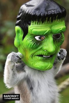Maky juguetón busca disfraz ideal para Halloween