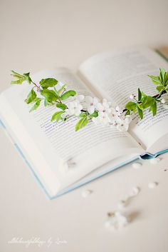 book, flowers, and read kép Book Flowers, Book Aesthetic, Open Book, Old Books, Flower Wallpaper, Book Photography, I Love Books, Bookstagram, Cherry Blossom