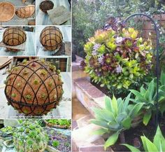 Succulent Sphere; wire garden spheres filled with succulents - how lovely!