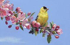 Goldfinch Linda Rossin