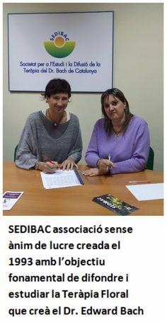 FLORS DE BACH. SEDIBAC associació sense  ànim de lucre creada el 1993 amb l'objectiu fonamental de difondre i estudiar la Teràpia Floral que creà el Dr. Edward Bach Studio, Activities