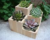 """Items similar to Flower planter, garden flower planter pot, cedar wood, tabletop size, 4 compartments for various plants and flowers: """"Jewel"""" on Etsy"""