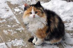 Petite chatte d'Espagne. Photo prise par Claude Beaupre.