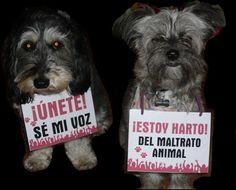 Manifestantes contra el maltrato animal.