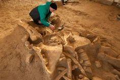 Un mammouth géant découvert sur les rives de la Marne près de Paris. Le squelette presque complet d'un mammouth laineux, ayant vécu entre 200 000 et 50 000 ans avant notre ère, vient d'être mis au jour dans une carrière de Changis-sur-Marne, en Seine-et-Marne. Une découverte exceptionnelle.