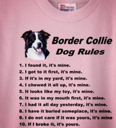 Border collie dog rules - seen on cafepress.com  .... so very true!