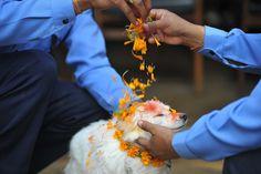 Le Festival Kukur Tihar au Nepal célèbre les Chiens (13)