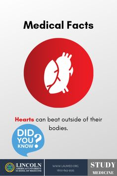 The heart does not need a brain, or a body for that matter, to keep beating. The heart has its own electrical system that causes it to beat and pump blood. Medical Facts, Medical News, Medical Science, Medical School, Human Body Facts, My Job, Pharmacy, Science Nature, Did You Know
