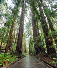 Towering up to 250 feet high, the trees in Muir Woods range in age from 400 to 800 years! The flat, easy trails looping through the monument are the perfect place to sneak in some active post-race recovery while you soak up the serene scene.