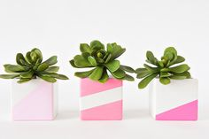 Use #marthastewartcrafts paint and DIY instructions from Best Friends for Frosting to make your planters stand out!