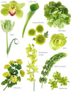 "Have you ever found a picture of a bouquet and wondered, ""What is that flower?""  Here is a collection of flower names sorted by color.  A few bouquet examples are at the bottom and so…"