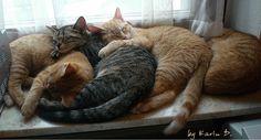 Too much sleepy cuteness.