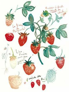 Fresh Picks: Botanical Artwork Through the Ages
