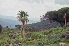 Bale mountains - Éthiopie — Wikipédia