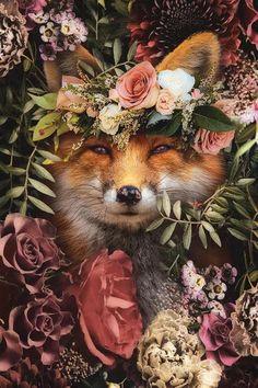 Beautiful Creatures, Animals Beautiful, Cute Animals, Canvas Art Prints, Canvas Wall Art, Fox Painting, Fox Art, Tier Fotos, Wildlife Art