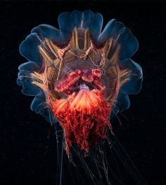 Pictured is a member of the Scyphozoa class of jellyfish captured by Alexander Semenov. This photograph has been shortlisted in the Environment category in the the Sony World Photography Awards. World Photography, Ocean Photography, Photography Awards, Animal Photography, Photography Tips, Street Photography, Landscape Photography, Portrait Photography, Fashion Photography