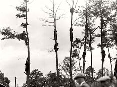 Fans on the trees during football match TS Wisla Krakow - Chelsea FC. Krakow,1936