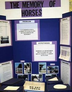 Science Fair Ideas With Horses