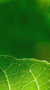 Image result for iphone wallpaper green