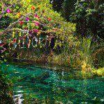Estamos a unos días de que se celebre la 2da edición de Bahidorá en el paradisiaco parque natural Las Estacas, este 15 de febrero.