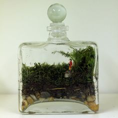 I love terrariums