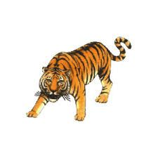 Tiger, a very misunderstood creature, its best to leave it be and go around this creature then bother fighting it as you may end up having more then you bargained for.