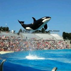 Sea World -  San Diego, San Antonio & Orlando!