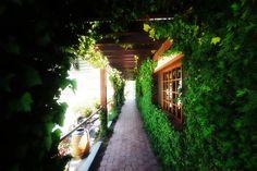 L. A. Cetto, Valle de Guadalupe, Baja California, Mexico. Baja California, Ensenada Mexico, Covered Walkway, Paradise Garden, Mexico Travel, Wineries, Phoenix, Vacations, Bali