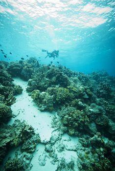 bunaken, indonesia dive resort