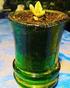 #collo #damigianadivino #vaso #piantinagrassa #cutglass #chiaracirio #cascinacirio