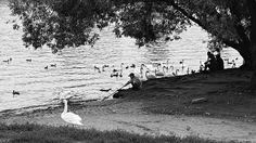 photo animals | free download photobank of black and white photos Black White Photos, Black And White, Free Black, Child, Water, Crafts, Animals, Gripe Water, Boys