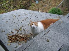 Mr. Mister on the roof of out home in PA