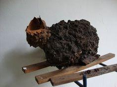 Boca-de-sapo preservada