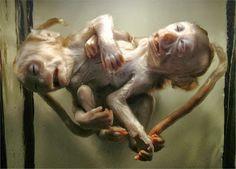 Conjoined Monkeys