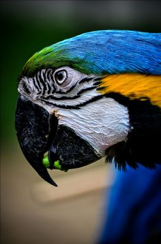 Lake View Park Bird - Macaw - by Shaukat Niazi