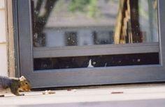 El vigilante | Las 100 fotos más importantes de los gatos de todos los tiempos