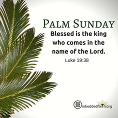 Palm Sunday - Blessed is the king who comes in the name of the Lord.