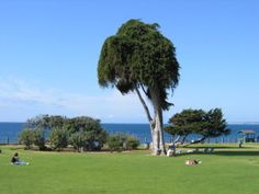 The city of La Jolla is home to a number of incredibly beautiful public parks. These parks are scattered throughout La Jolla and are ideal for visitors that want to relax, play and enjoying everything that this great city has to offer.
