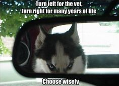 CHOOSE WISELY!!! XD I love the adorable angry husky faces <3