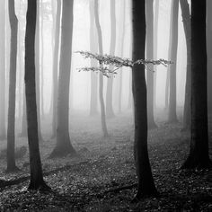 Photography, Digital in Nature, Vegetal, Tree, forest - Image Czech Republic Foggy Forest, Misty Forest, Magical Forest, Tree Forest, Best Landscape Photography, Forest Photography, Image Photography, Monochrome Photography, Black And White Photography