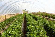 Investor interest is growing in farmland