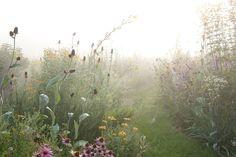 The garden of landscape designer Tom Stuart-Smith Landscape Architecture, Landscape Design, Garden Design, Plant Aesthetic, Nature Aesthetic, Tom Stuart Smith, Champs, Meadow Garden, Exotic Plants