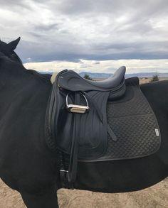Man I love this saddle Pretty Horses, Beautiful Horses, Lauren Johnson, Old Money, Levi X Eren, Horse Girl, Horse Tack, Horseback Riding, Horse Riding