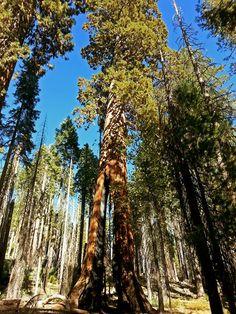 https://www.facebook.com/YosemiteNPS/photos/pcb.725906957457589/725906170791001/?type=1